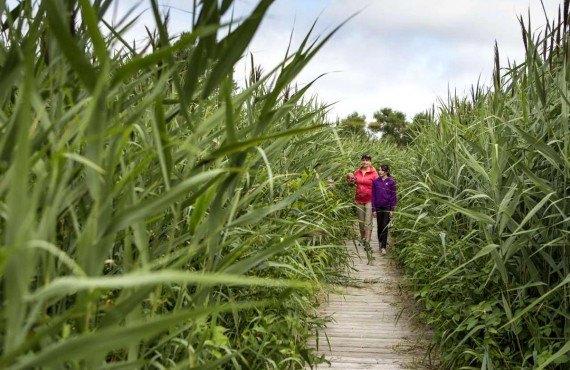 5-camping-parc-iles-boucherville-rando