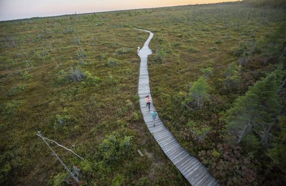 Randonnée pédestre dans les marais