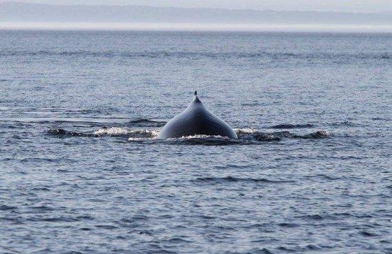 5-croisiere-baleines-zodiac