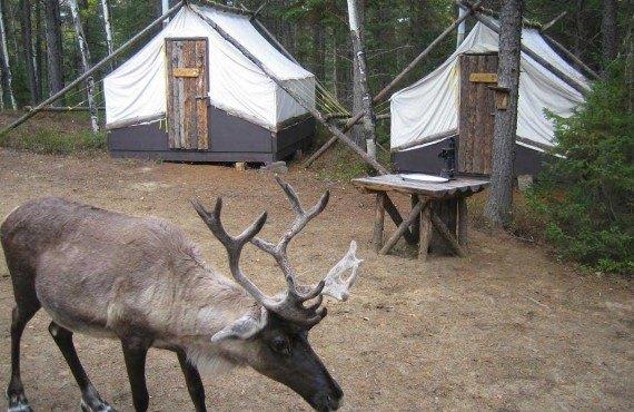 5-dormir-caribous-zoo-st-felicien-lac-st-jean.jpg