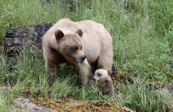 A mother bear and her cub
