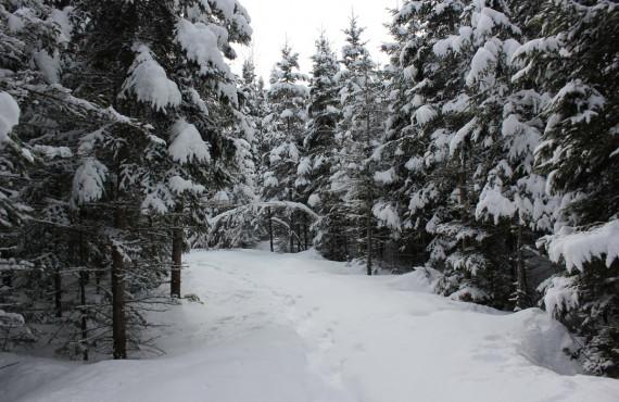 Sentiers de raquettes en forêt