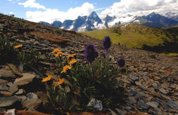 Fleurs alpines, Destination BC, David Gluns