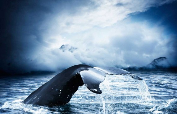 Observation des baleines - Tadoussac