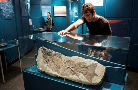 Exposition du Musee d'histoire naturelle