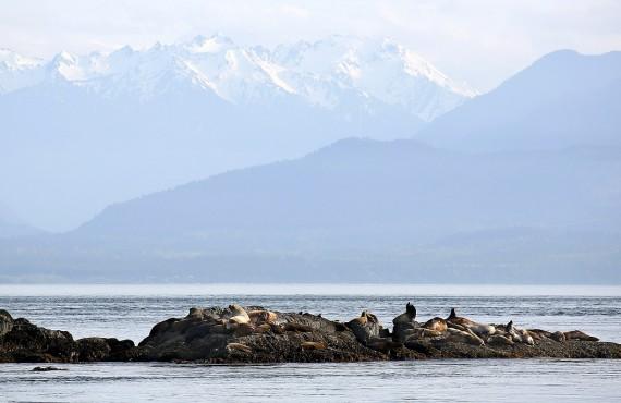 5-safari-bateau-victoria