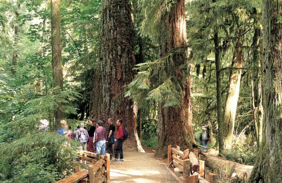 Cathedral Grove, MacMillan National Park