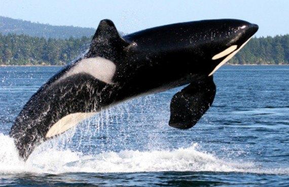 Gîte Ocean View - Observation des baleines