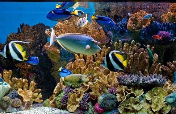 6-new-england-aquarium-boston.jpg