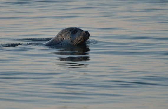 6-safari-baleines-zodiac