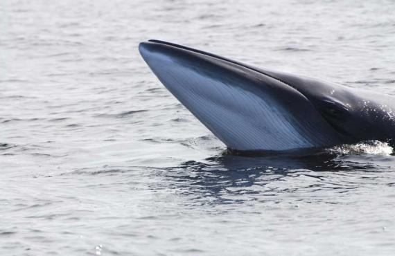 Auberge La Rosepierre - À proximité, les baleines