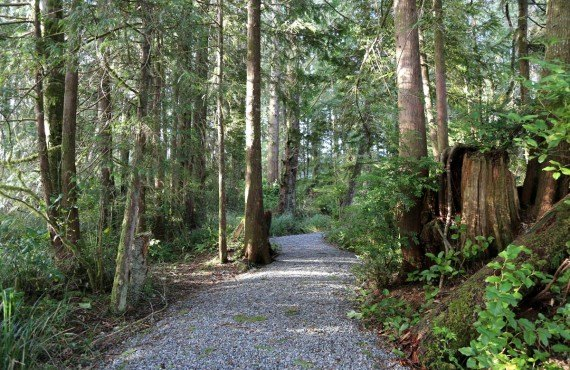 7-jamies-rainforest-inn-sentier
