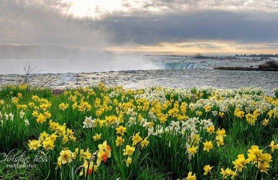 Un matin de printemps aux chutes du Niagara
