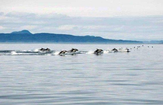 7-vie-sauvage-premiere-nation-dauphins.jpg
