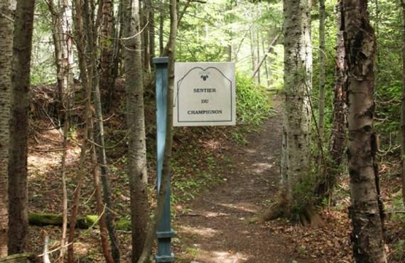 Sentier du Champignon