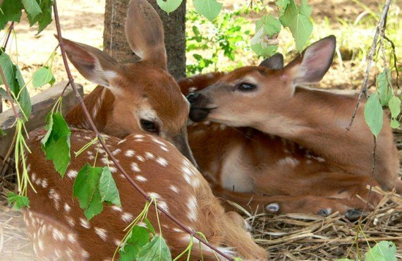Ferme 5 étoiles - Visite des animaux