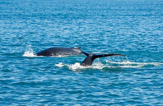 Observation des baleines à proximité