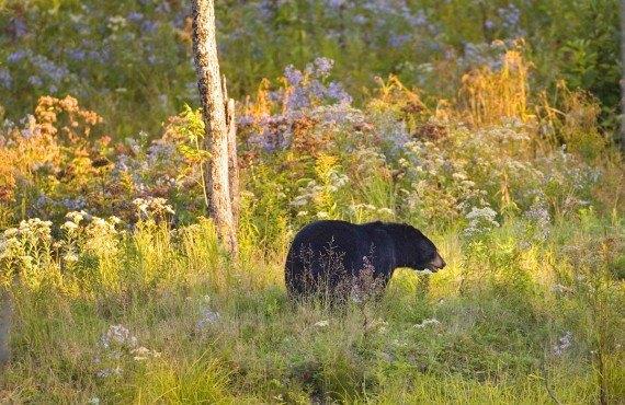 8-parc-omega-ours-noir
