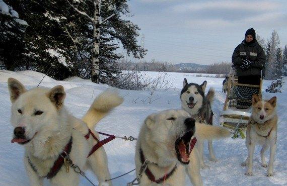 Pourvoirie du Fjord - Traîneau à chien