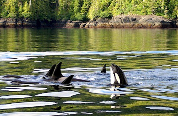 8-quaterdeck-inn-baleines