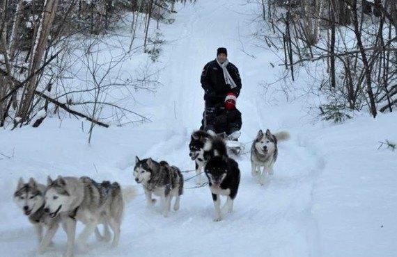 Les chalets Mekoos - Traîneau à chiens