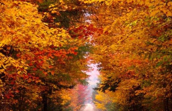 Jardins de l'Achillée Millefeuille - En automne