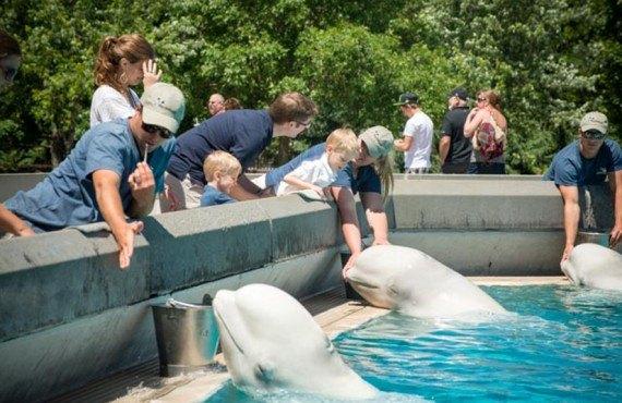 Rencontre avec les Belugas