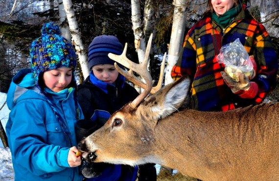 Pourvoirie du Fjord - Les animaux sur le site