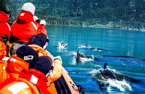 April Point Resort & Spa - Observation des baleines