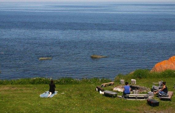 Auberge Manoir des Sapins - Observation des baleines dans la cour arrière