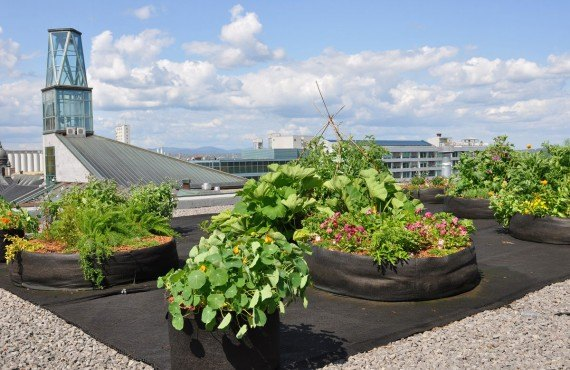 Herbal garden on the roof