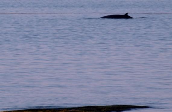 91-camping-parc-mer-mont-louis-baleines