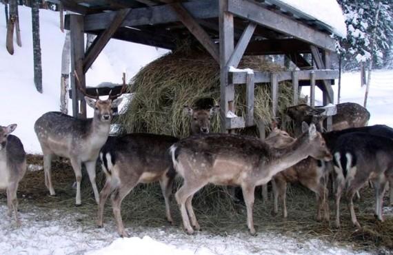 Les chalets Mekoos - Cerfs à proximité