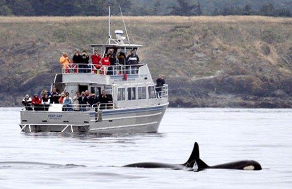 A proximite, les baleines
