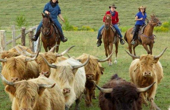 Auberge Le Baluchon - Cowboy dans l'âme