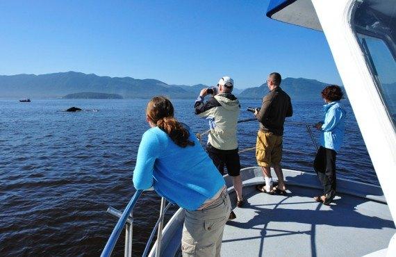 Pourvoirie Canadian Princess - Observation des baleines