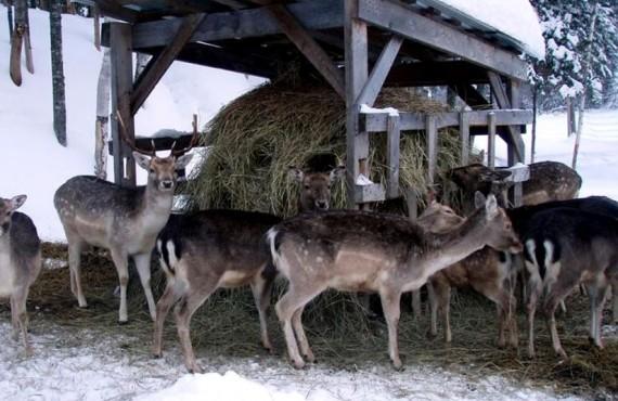 Pourvoirie du Nord - Les Cerfs