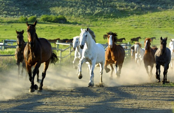 92-ranch-sundance-chevaux