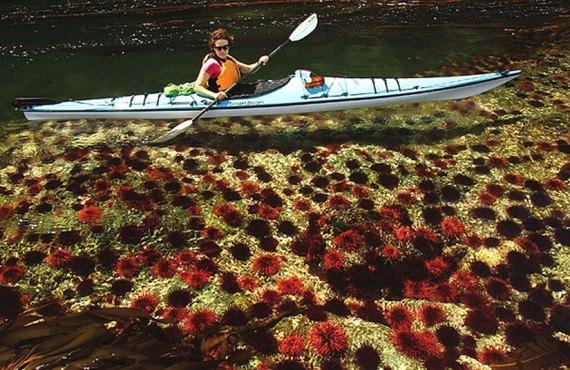 Sonora Resort - Randonnée en Kayak