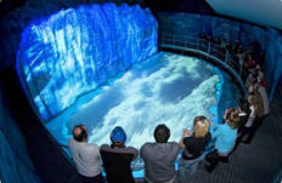 Le Jardin des Glaciers