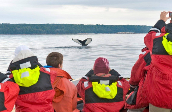 Safari photo aux baleines