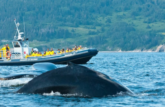 Observation des baleines en Gaspésie