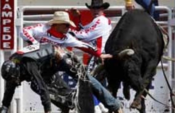 calgary-stampede.jpg