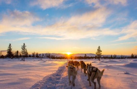 Traîneau à chiens au coucher du soleil