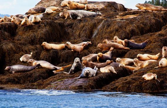 Marine mammal observation, St. Andrews