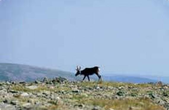 Parc National de la Gaspésie