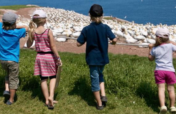 Famille qui regarde les fous de Bassan en Gaspésie