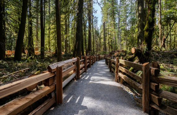 Cathedral Grove Victoria