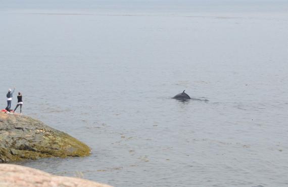 Excursion en kayak pour observer les baleines