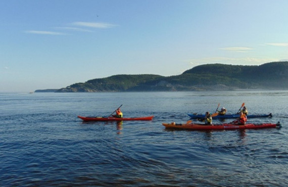 Tour guidé en kayak pour observer les baleines